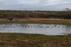 Vaughn Ranch Ducks 2015